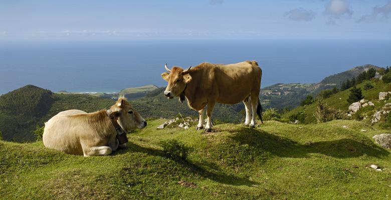 Vacas-Fito